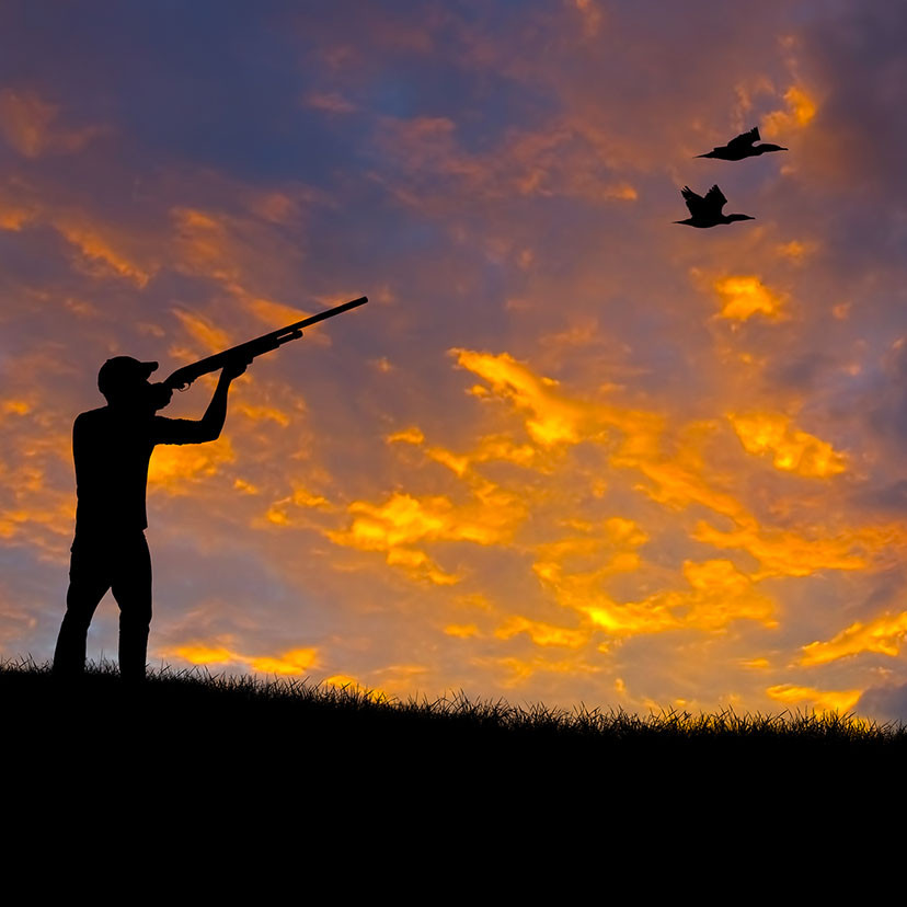 Jagttegn weekend kursus (Saltum) Forår